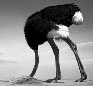 ostrich_head_in_sandb